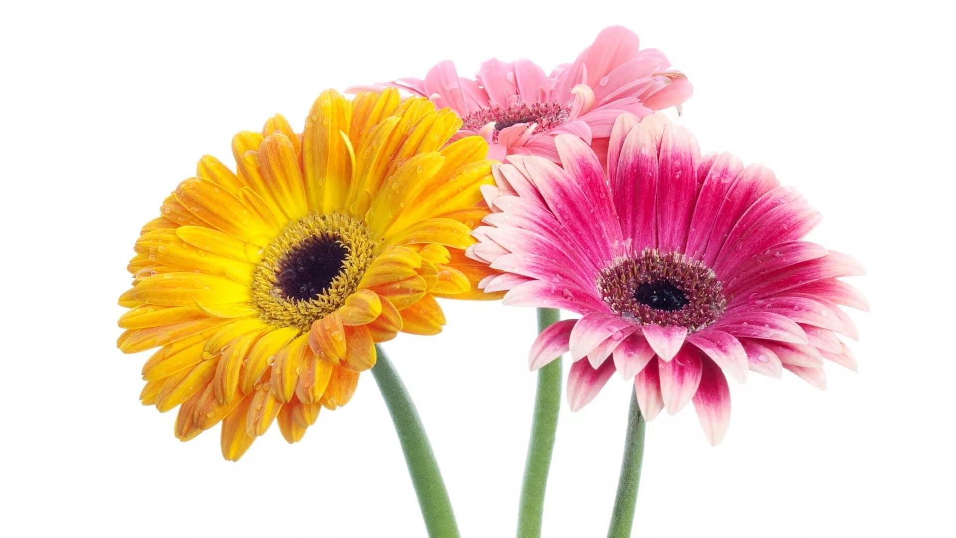 Авиаперевозка цветов